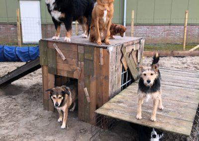 selinashondenresorthondenrots